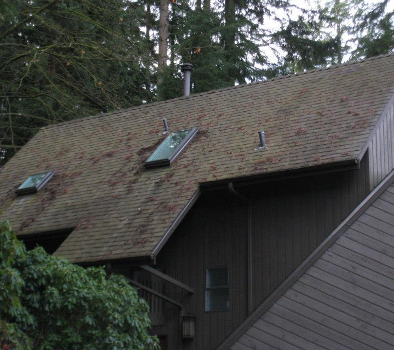 Neo Roofing Solutions Ltd. - Maintenance & Cleaning