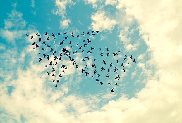 Volée d'oiseaux en formation