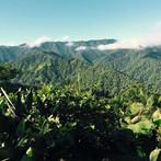 santa-lucia-cloud-forest (1).jpg
