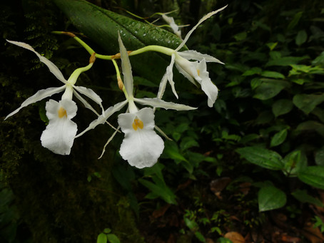 Orchid Monitoring January 2020