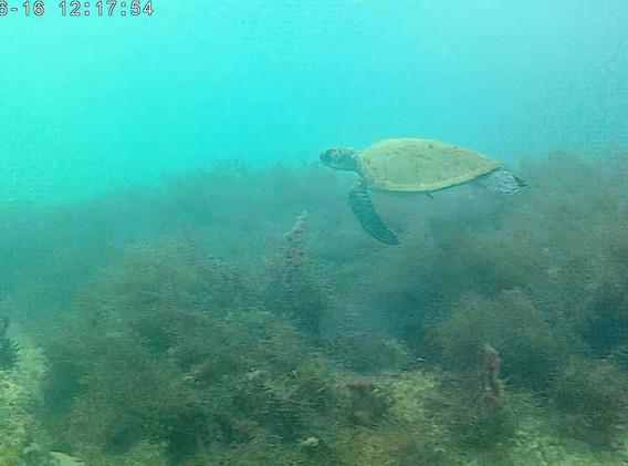 monitoramento subaquático. mp4