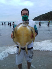 monitoramento de tartarugas que vem na rede de pesca da tainha