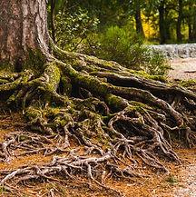 tree roots.jfif