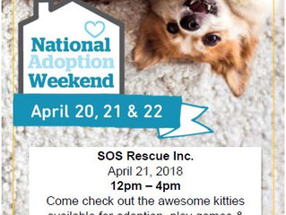 National Adoption Weekend Event
