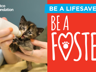 Be A Lifesaver! Be A Foster!