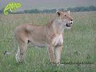 Visit Masai Mara with OTA - Overland Travel Adventures