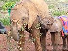 Visit David Sheldrick Elephant Orphanage with OTA - Overland Travel Adventures
