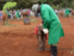 David Sheldrick Elephant Orphanage, Masai Mara Safari, OTA - Overland Travel Adventures