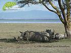 Visit Lake Nakuru with OTA - Overland Travel Adventures