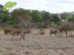 Elephants in Lumo Sanctuary, Tsavo & Amboseli Safari, OTA - Overland Travel Adventures