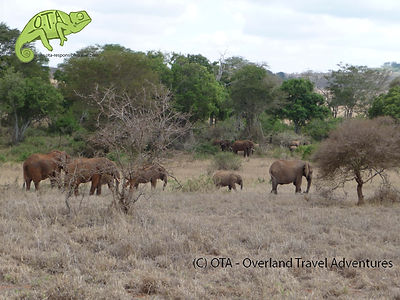 Elephants in Lumo Sanctuary, Tsavo & Amboseli Safari, OTA - Overland Travel Adventures