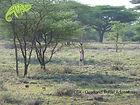 Visit Samburu with OTA - Overland Travel Adventures