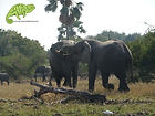 Young male elephants play fighting, OTA - Overland Travel Adventures safaris