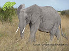 Elephant in Amboseli, Mara, Nakuru & Amboseli Safari, OTA - Overland Travel Adventures