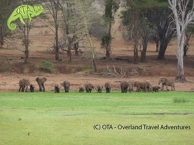 Elephants in Lumo Sanctuary, Capital to Coast Adventure, OTA - Overland Travel Adventures