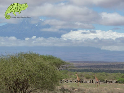 Giraffes and Mt Kilimanjaro, Amboseli, Tsavo & Amboseli Safari, OTA - Overland Travel Adventures