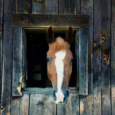 The Best Veterinary Care Happens on your Farm