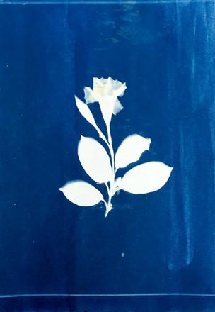 hamelaha cyanotype 1.jpg