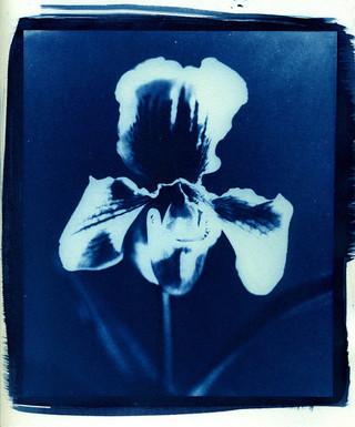 print_cyanotype_005_by_charlesguerin-d38