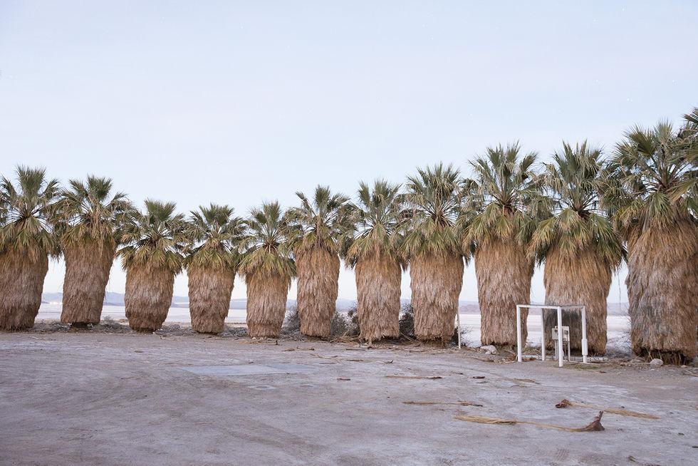 desierto palmeras Mojave eeuu