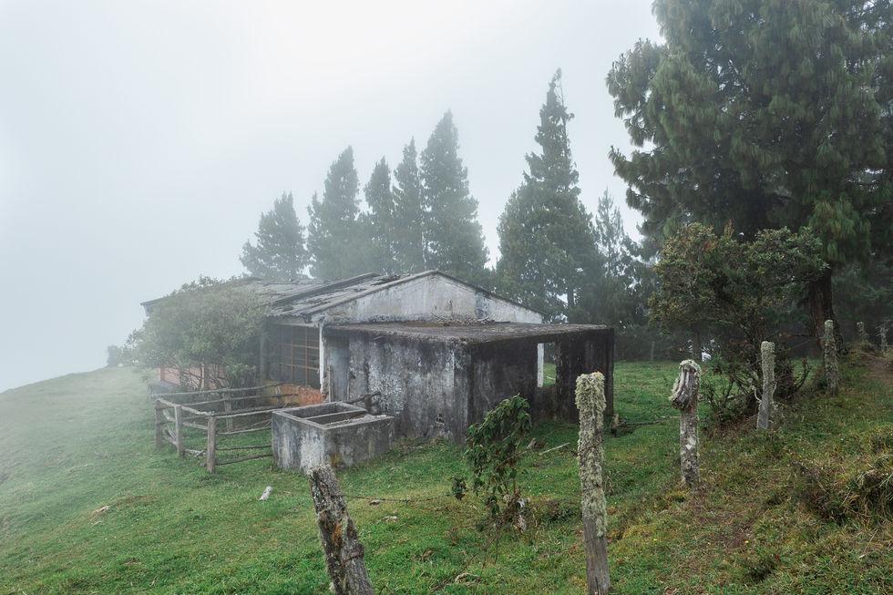 Niebla paisaje casa verde