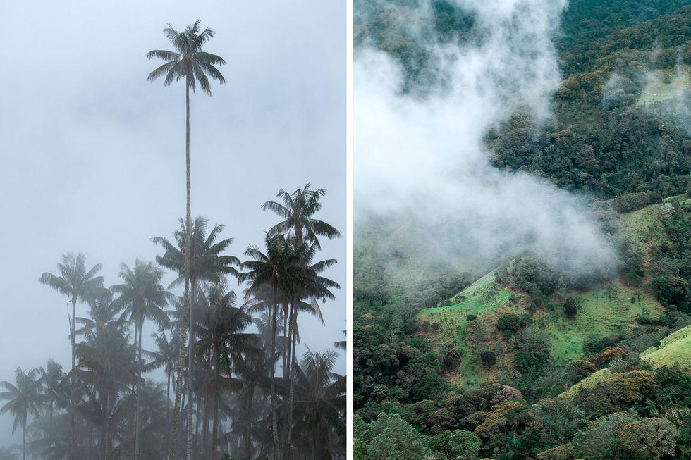 Selva tropical palmeras Colombia niebla