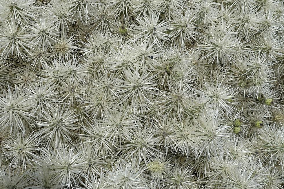 Cactus verde detalle