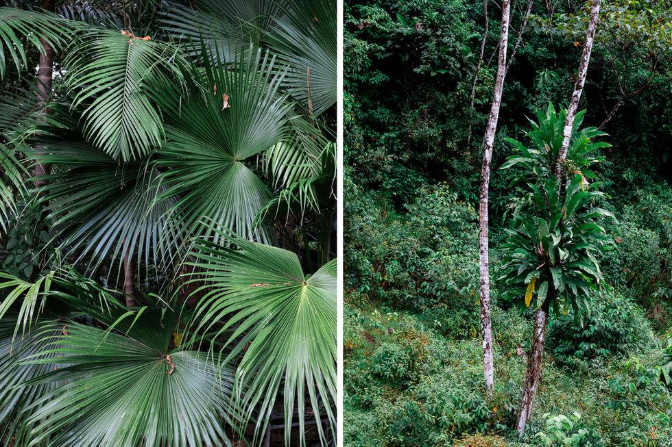 Selva tropical palmeras Colombia