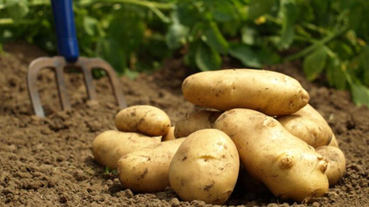 patates.jp