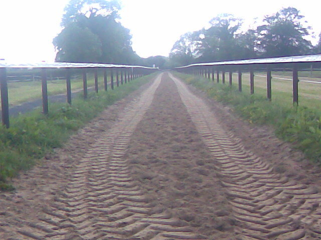 PVC Rail  (Tape) around Horse Gallop 2