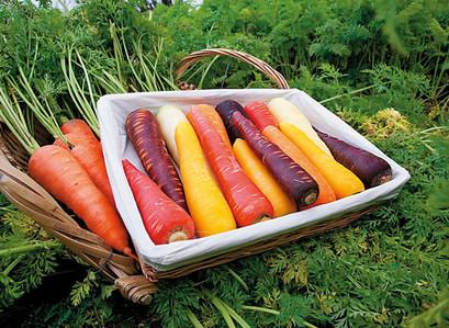 緊急企劃-滿228元就送VDS彩色胡蘿蔔