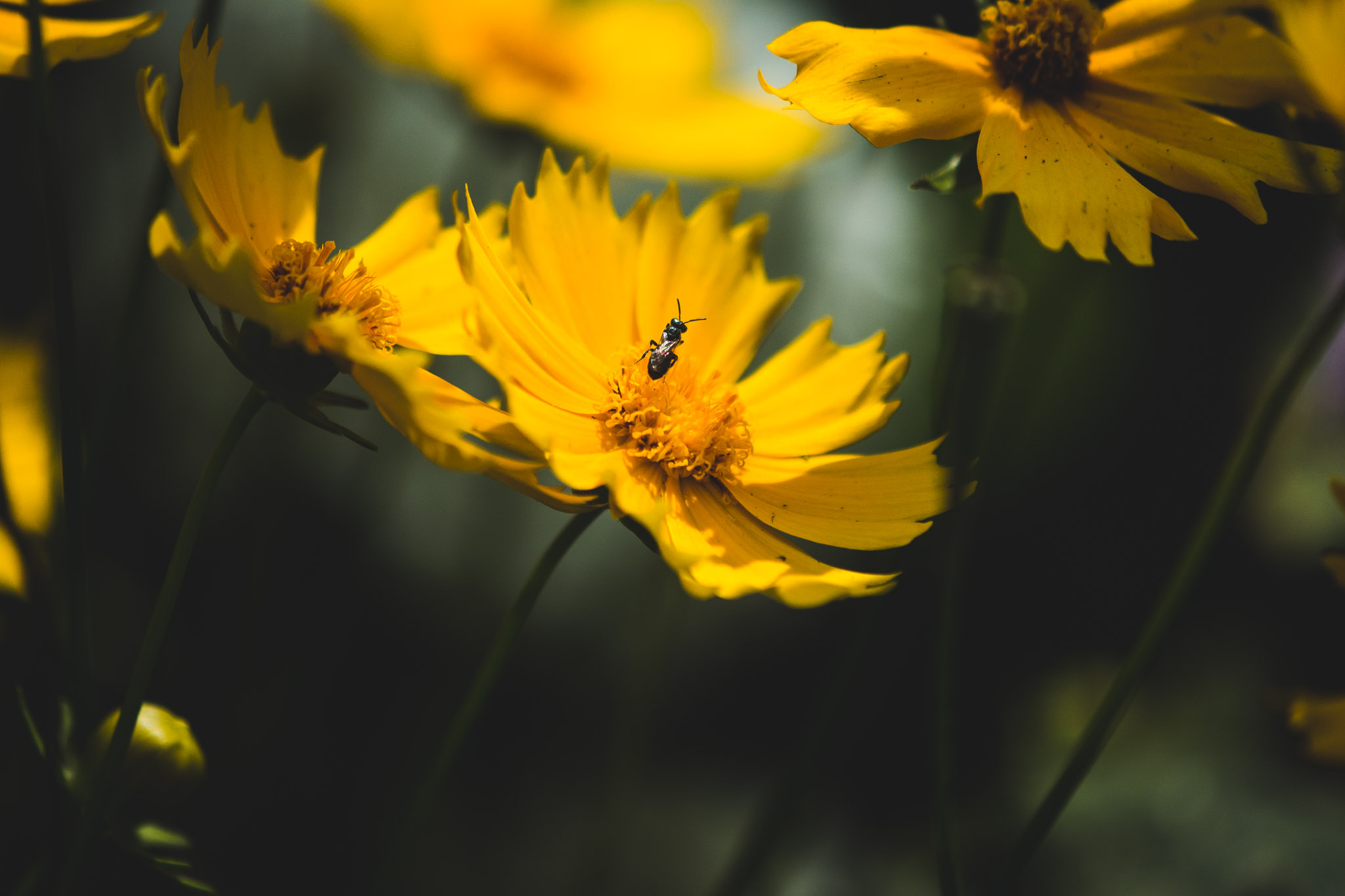 SycamoreLane Photography-13