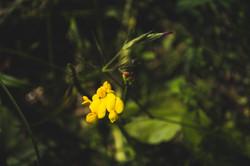 SycamoreLane Photography-9
