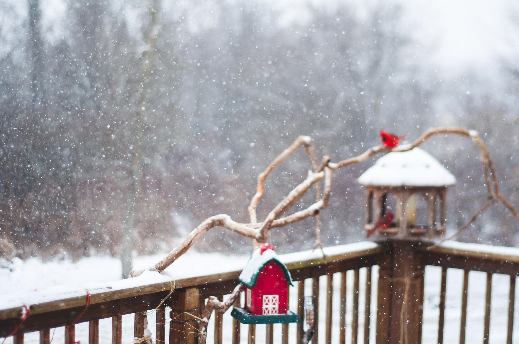 Cardinals {Freelensed}