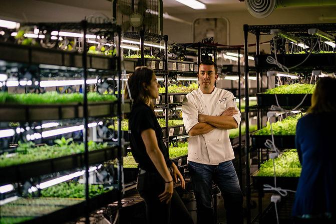 Boston Microgreens How to grow microgreens