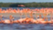 flamingos-celestun.jpg