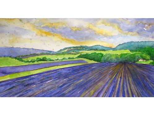 """Lavender Fields UK, 11"""" x 19"""""""