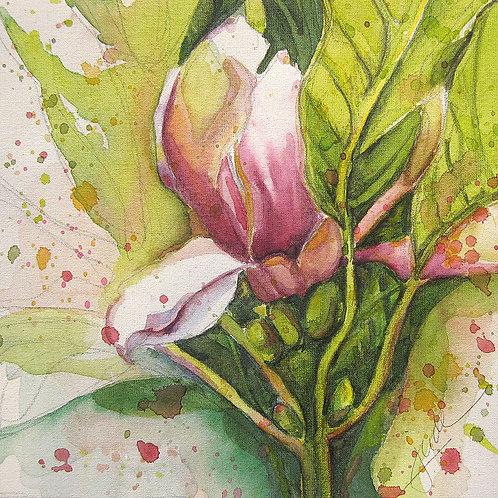 "French Magnolia, 15"" x 15"""