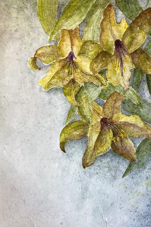 "Masa Lilies, 17"" x 23"""