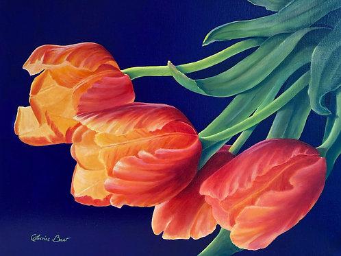 "Hot Tulip Delight, 16"" x 20"""