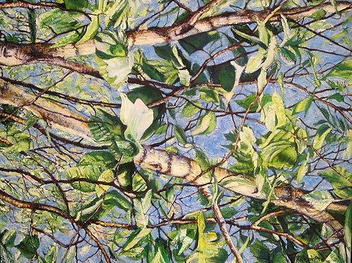 """Standing Under Birches, 24"""" x 30"""""""