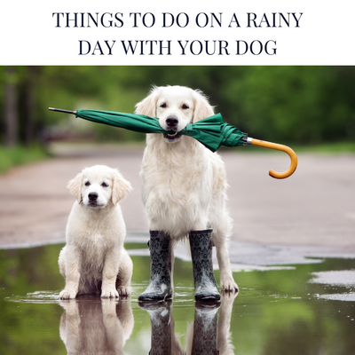 Things to do on a rainy day with your dog