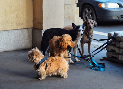 Put An End to Dog Theft
