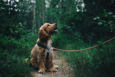 How to Find a Good Dog Walker.
