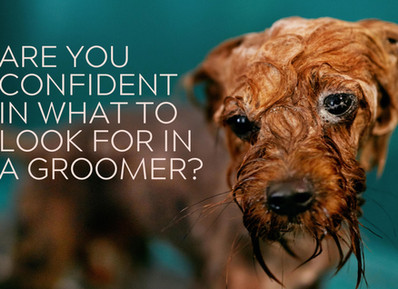 How To Choose a Good Dog Groomer
