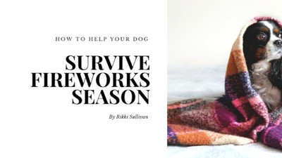 How to help your dog survive fireworks season