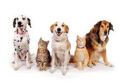 dogsandcats1.jpg