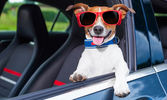 Dog_in_car.jpg
