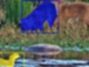 Fox+Duck2-b.jpg