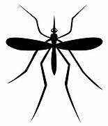 Mosquito Control arizona